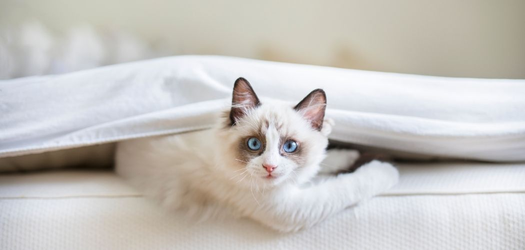 How To Clean A Futon Mattress Of Cat Pee